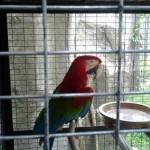 Melaka Bird Park - burung warna
