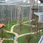 Melaka Bird Park - green