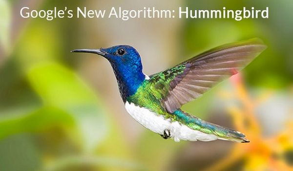 Hummingbird Update Dan Quality Content Blog