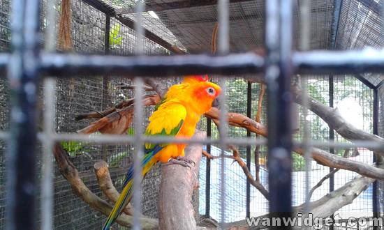 Zoo Johor – Yellow Parrot