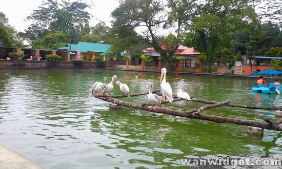 Zoo Johor Bangau
