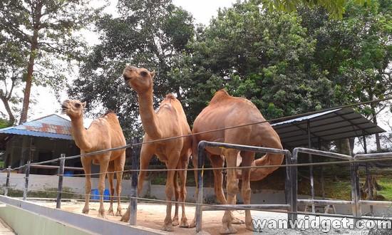 Tempat Menarik di Johor Bahru –  Zoo Johor
