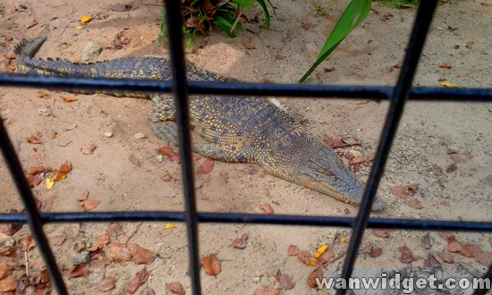 Zoo Johor Crocodile