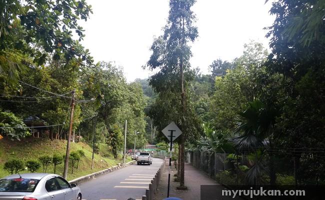 Jogging Di Hutan Lipur Cherok Tok Kun Penang