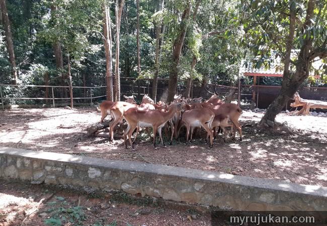 Rusa Kancil Zoo Melaka
