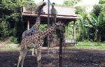 Tempat Pelancongan Menarik Melawat Zoo Melaka