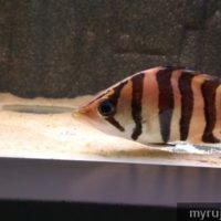 Ikan di aquarium penang