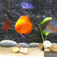 Ikan warna warni di aquarium pulau pinang