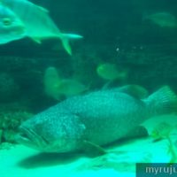 Pusat aquarium besar Pulau Pinang