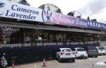 Cameron Lavender Farm Tempat Menarik Untuk Pecinta Bunga