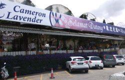 Permandangan hadapan pintu masuk Cameron Lavender Farm