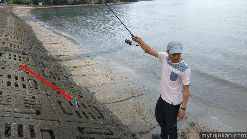 Berjaya menaikkan ikan todak kecil di pantai merdeka kedah