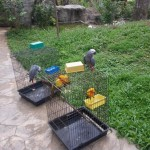 Melaka Bird Park - Burung