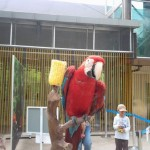 Melaka Bird Park - red bird