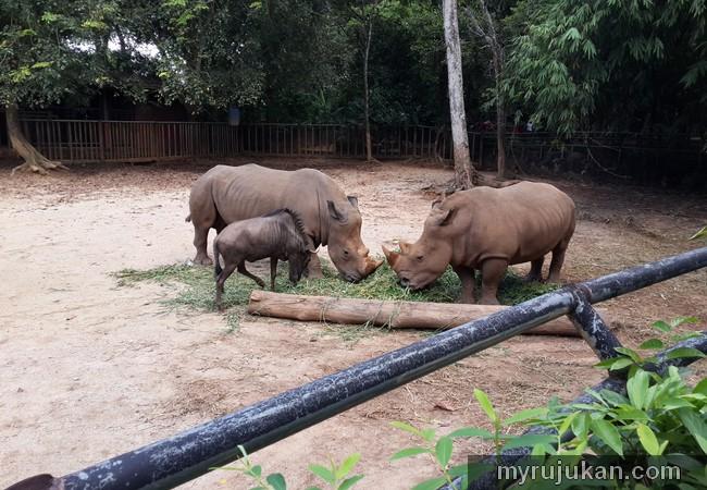 Badak Sumbu Zoo Melaka