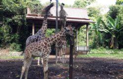 Zirafah Zoo Melaka