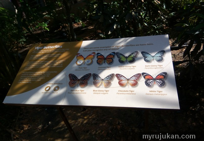 Contoh Tiger Butterflies
