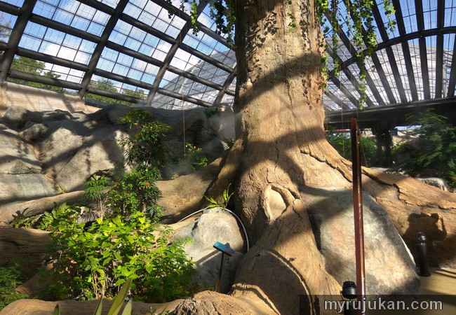 Pokok besar di Penang Butterfly Farm