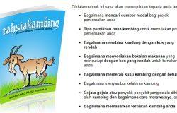 Kejayaan hasil pendapatan buat duit dengan penternakan kambing