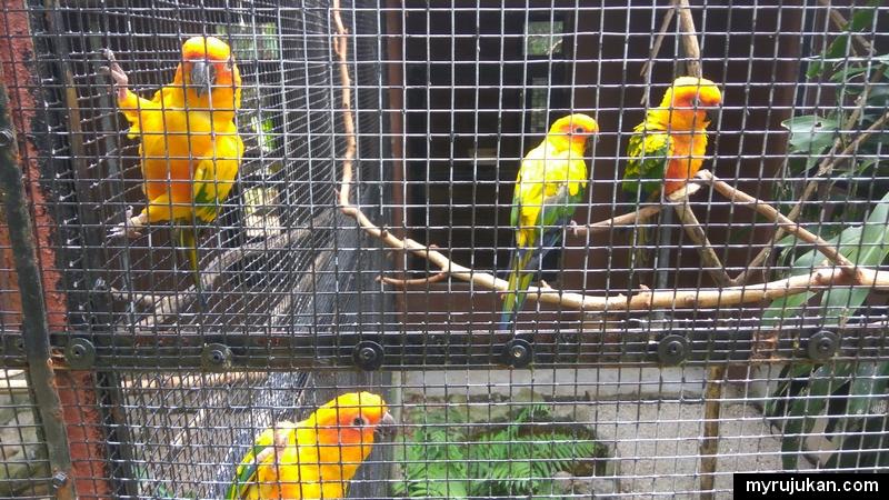 Antara burung yang ada di Pulau Pinang Bird Park