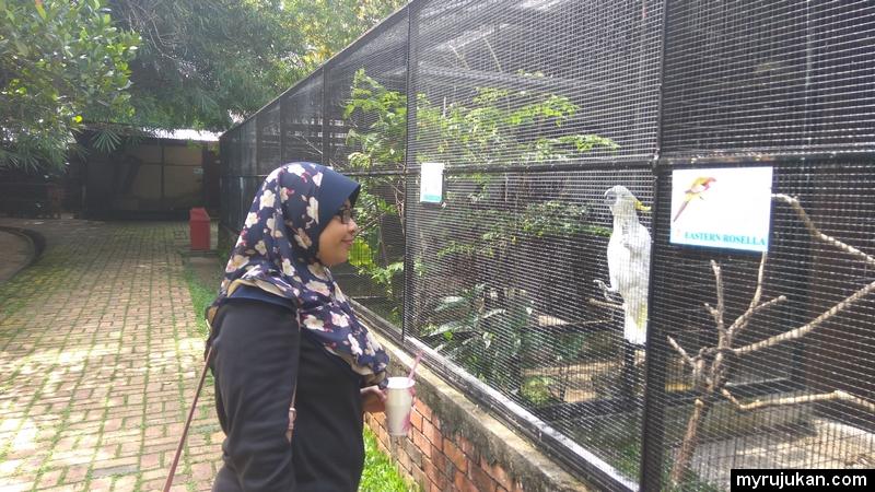 Seronok melihat pelbagai jenis burung yang cantik di Penang Bird Park
