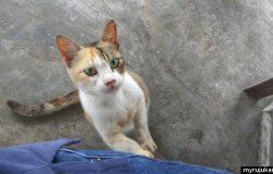 Kucing datang minta makanan dan keluarkan bunyi meow meow