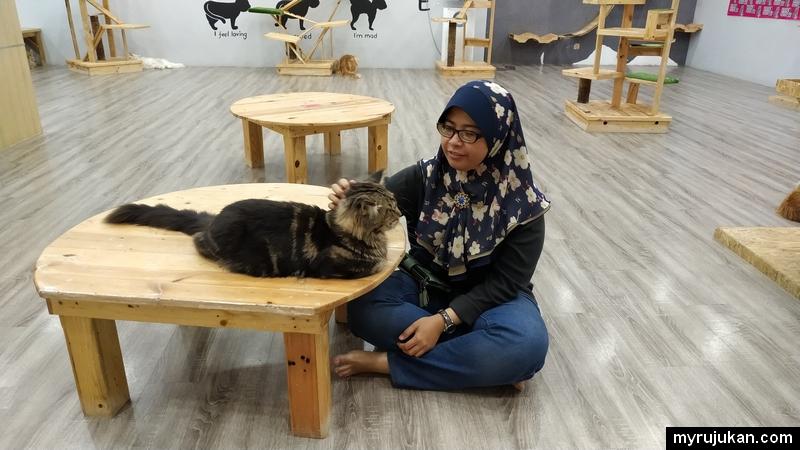 Membelai kucing yang ada di Little Cute Cat Mydin Pulau Pinang