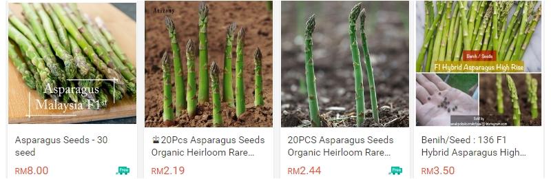 Biji benih organik asparagus
